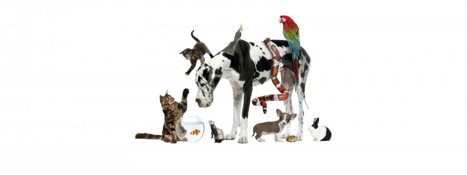 Find A Pet
